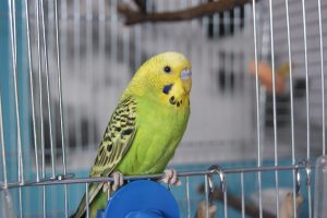 Pet Bird Care The Basics (From The AAV)