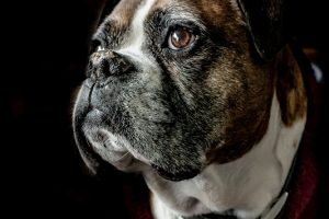 Ten Things To Keep Your Senior Pet Healthy